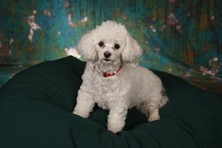 Photography, Portrait, Pet, Cleveland, Northeast Ohio
