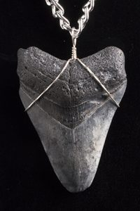 Necklace - Megaladon Tooth